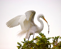 "Bertazzoni, Jamaica, Nikon, artistic, beak, colors, feathers, fishing, ""flying egret"", heron, legs, migration, nature, nesting, panning, parade, pond, safari, swamp, ""white egret"""