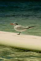 Seagull, beach, details, jamaica, reflects, sand, sea, summer, surf, water