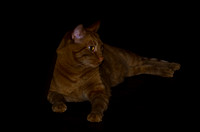 "Cat, darkness, home, house, observing, pet, ""red cat"", resting"