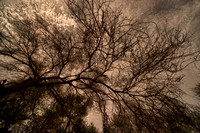 Dusk, branches, dawn, garden, landscaping, nature, park, shade, structures, trees