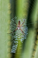 "Bertazzoni, Nikon, Texas, ""argiope aurantia"", bite, colors, garden, hunting, insects, legs, phobia, poison, spider, web, ""yellow spider"""