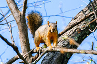 "Bertazzoni, Nikon, Squirrel, bokeh, branches, eyes, forest, ""ground Squirrel"", jumping, nature, nut, park, pecan, sky, tail, tree, woodland, yard"