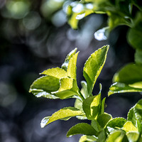 colors, leaves, Bertazzoni, Nikon, green, yellow, nature, plant, yard, nature, details, structure, contrast, garden,spring, bokeh