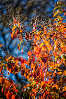 Bertazzoni, Bokeh, Lomography, Nikon, abstract, autumn, circles, colors, leaf, nature, spring, structure, texture, tree, veins, veins, yard